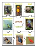 ANIMAL COVERINGS PUZZLE - Feathers, Fur, Scales, and Exoskeleton - CENTER