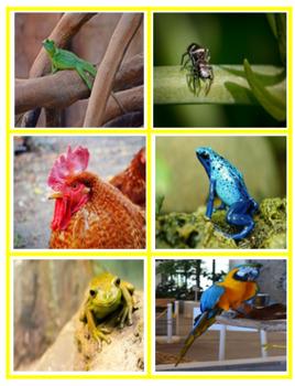 ANIMAL GROUPS SORTING CARDS