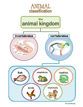 classification of mammals upto order pdf