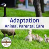 ANIMAL PARENTAL CARE: FuseSchool Biology Video Guide