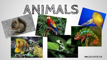 ANIMALS POWER POINT