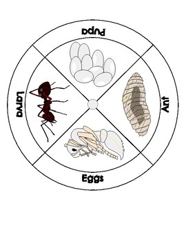 ANT LIFE CYCLE -wheel, ant life cycle board game, ant life cycle cards,clip arts