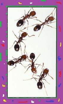 ANTS PUBLIC DOMAIN CLIP ART (66 images)