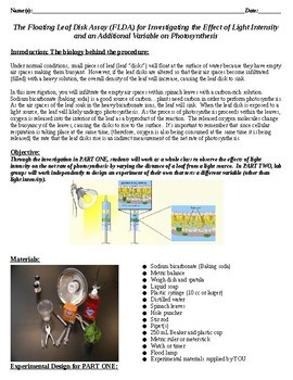 """AP Bio Photosynthesis Lab """"The Floating Leaf Disk Assay"""" -Adapted & Expanded"""