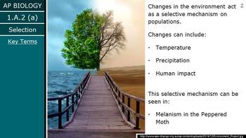 AP Biology (2015) - 1.A.2-3 - Phenotypic Variation & Genetic Drift PowerPoint