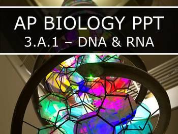AP Biology (2015) - 3.A.1 - DNA & RNA PowerPoint