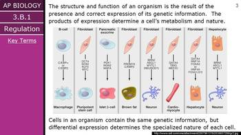 AP Biology (2015) - Unit 3.B - Gene Expression PPT