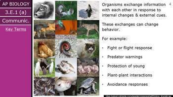 AP Biology (2015) - Unit 3.E - Communication PowerPoint