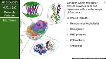 AP Biology (2015) - Unit 4.C - Diversity PowerPoint