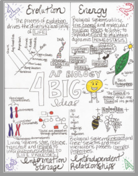 AP Biology 4 Big Ideas Sketch Doodle Notes