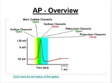 AP Biology 62 Presentations, 73 Assessments, 77 Study Guides huge bundle PART 3