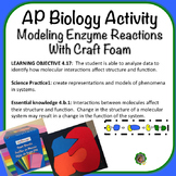AP Biology Activity, Modeling Enzyme Reactions with Craft Foam