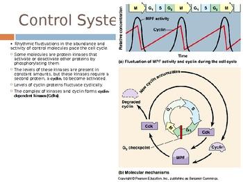 AP Biology Big Idea 3.A.2 Cell Cycle