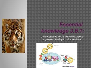 AP Biology Big Idea 3.B.1 gene regulation