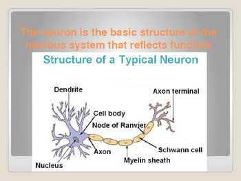 AP Biology Big Idea 3.E.2 Neuron Function