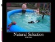 AP Biology Big Ideas Natural Selection