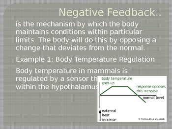 AP Biology Big Ideas Review Feedback;Plant and Animal Responses