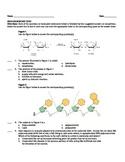 AP Biology Biochemistry Test