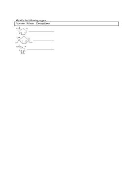 AP Biology Biochemistry quiz