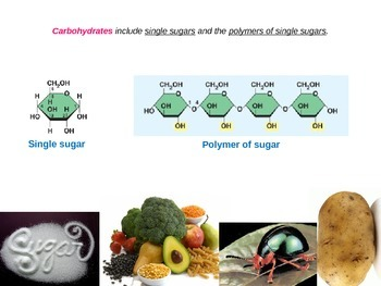 AP Biology Carbohydrates and Lipids Lecture PPT