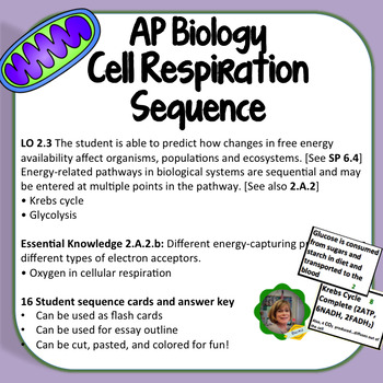 ap biology cellular respiration