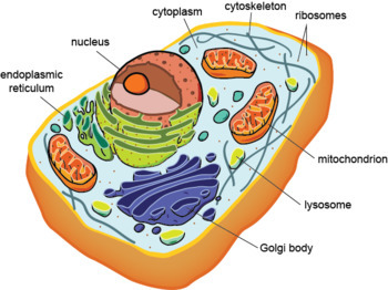 Ap Biology Concept Map Cell Structure Function And Cell Membrane