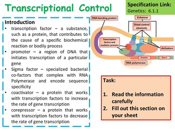 AP Biology Control of Gene Expression Lesson & Activities