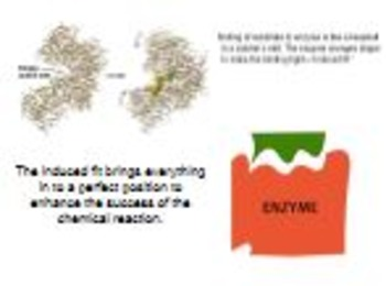 AP Biology Enzymes Lecture PPT