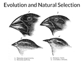 AP Biology: Evolution and Natural Selection - Updated and Streamlined