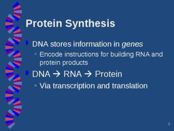 AP Biology From Gene to Protein