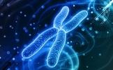 AP Biology Greed Review Game Bundle!!