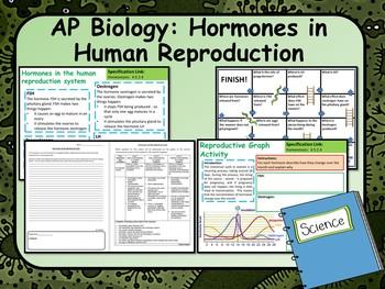 AP Biology:  Hormones in Human Reproduction