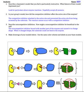 AP Biology Macromolecules and Enzymes Bundled Unit