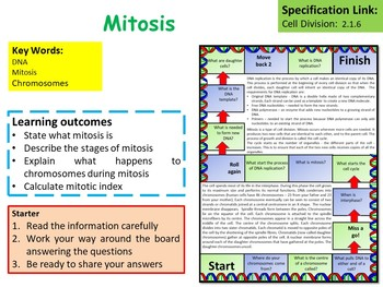 AP Biology: Mitosis Lesson & Activities