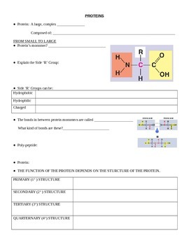 AP Biology Proteins Lecture NOTESPAGE