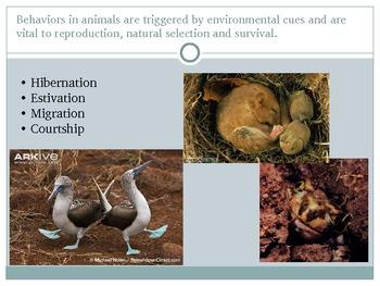 AP Biology Review Behavior
