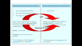 AP Biology Review - Photosynthesis ppts with test paper and mark scheme