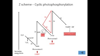 AP Biology Review - Photosynthesis ppts with test paper an