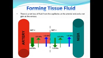 AP Biology Review - The heart and tissue fluid - ppts, assessments papers