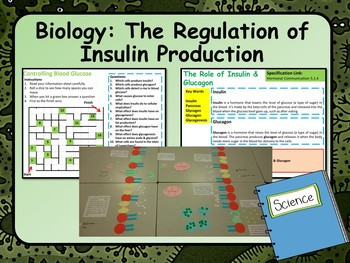 AP Biology:  The Control & Release of Insulin Lesson & Activities