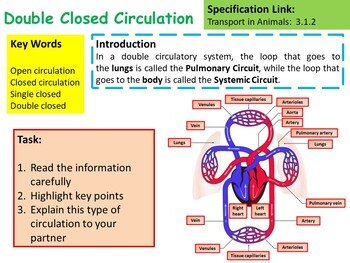 AP Biology Types of Circulation Lesson & Activities