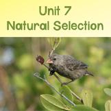 AP Biology Unit 7: Natural Selection PowerPoint