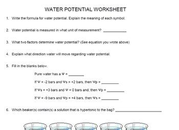 AP Biology Water Potential Worksheet