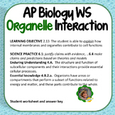 AP Biology Worksheet:  Learning Objective 2.13, Organelle Interactions