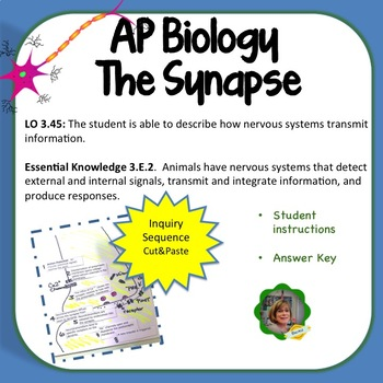 AP Biology, the Synapse