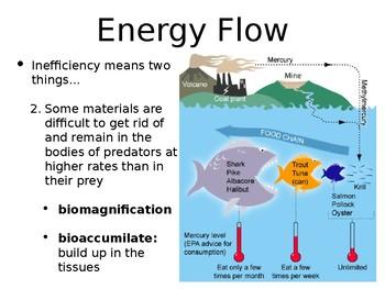 AP Environmental Science Ecosystem Energy PowerPoint