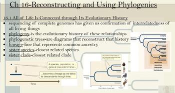 AP Phylogeny