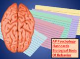 AP Psychology - Biological Bases of Behavior, Best Flashca