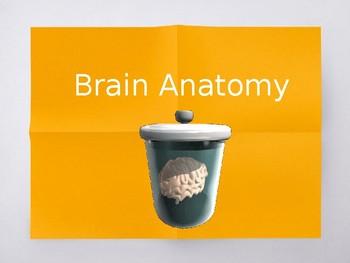 AP Psychology Brain Parts & Functions PPT