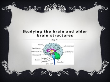 AP Psychology Brain Power Point
